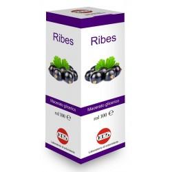 Kos Ribes Nigrum Mg 100 Ml...