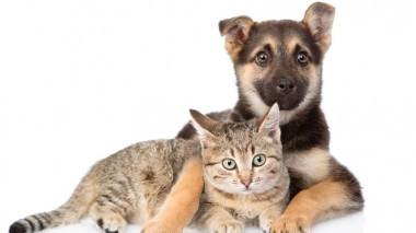 Antiparassitrari per cani e gatti: come sceglierli