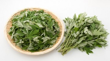 Che cos'è e a cosa serve l'Artemisia Annua?